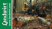 Holz - das Naturtalent