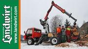 Reform Muli im Forsteinsatz