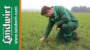 Herbizidanwendung bei Wintergetreide im Herbst