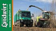 Energieholz Feldtag 2012