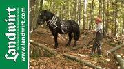 Holz r�cken mit Pferden