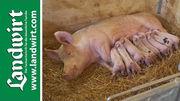 Bio Schweinestall - Teil 1