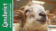Tag der Schafhaltung 2016