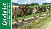 Weide Triebwege für Rinder