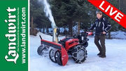 Köppl Gekko im Schnee