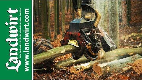 Holz - ein wahres Energiebündel