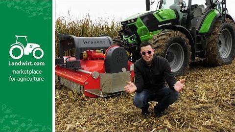 Im Kampf gegen den Maiszünsler