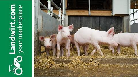 Bräuer Tierwohl-Schweineställe