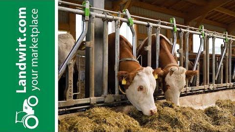 Bio-Milchkuhstall mit Stalltechnik Bräuer