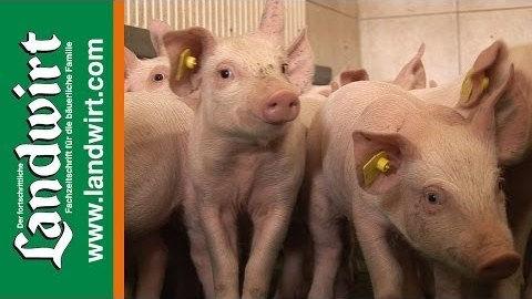 Schweinezucht Pruckner und Sieder