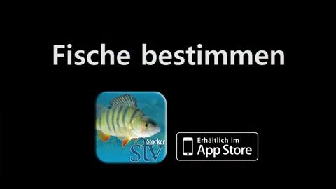 Fische bestimmen App