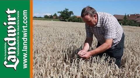 Saatstärke bei Weizen reduzieren - Ertrag halten