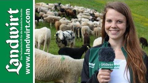Klauenbad für Schafe