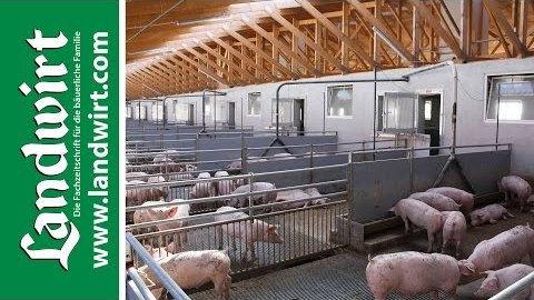 Tiergerechte Stallkonzepte für Schweine