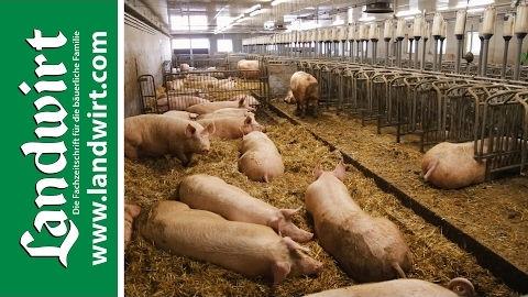 Stallbau für Schweineställe